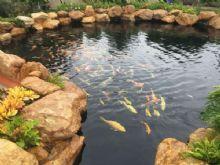 天津園林建筑假山石黃蠟石魚池圍邊觀賞假山制作